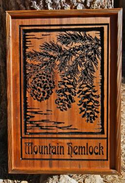 Mountain Hemlock Cones - $180